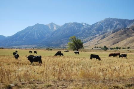 Rangeland grazing is among the first ag operations to be affected by drought.