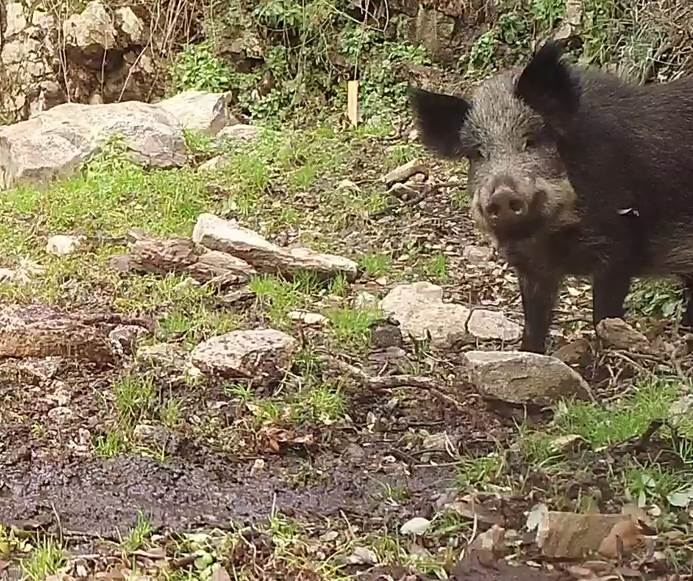 The Goal Of The App Is To Demarcate Wild Pig Damage Ultimately Allowing Us To Relate This Data To Habitat Features Present At Damage Sites To Determine