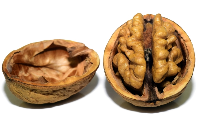 The UC Agricultural Issues Center has released a new cost study on walnuts.