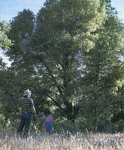 "McCreary and daughter Megan walk among the oaks in a photo published in California Agriculture's ""Urbanization crowds out oaks"" article in September 1995."