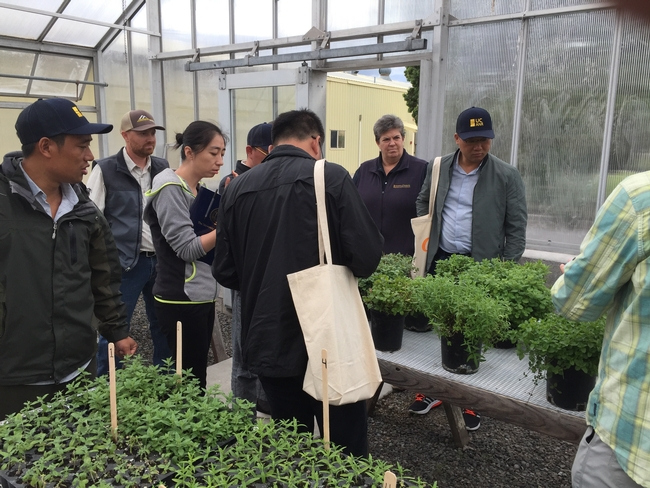 The Chinese Extension Alliance Delegation toured Intermountain Research and Extension Center's mint greenhouse.