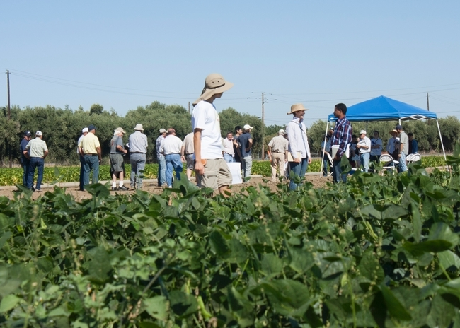 Dry Bean field day at UC Davis. (photo: Bradley Hooker)