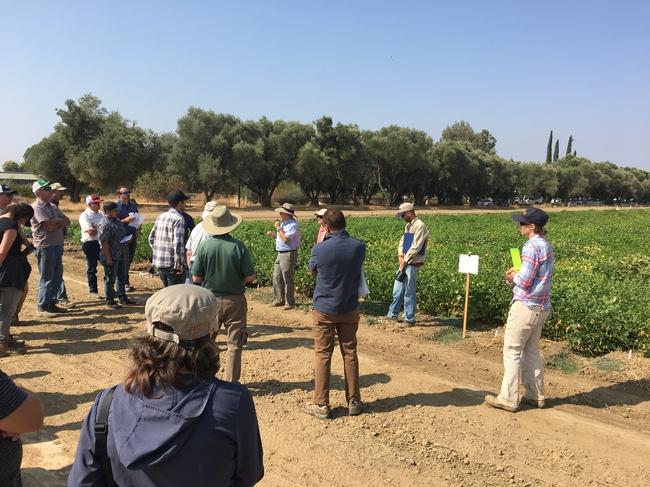UC Dry Bean Field Day 2018.