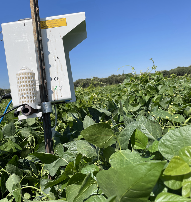 The sensors monitor temperature and humidity along with insect numbers, UC Davis, 2021.