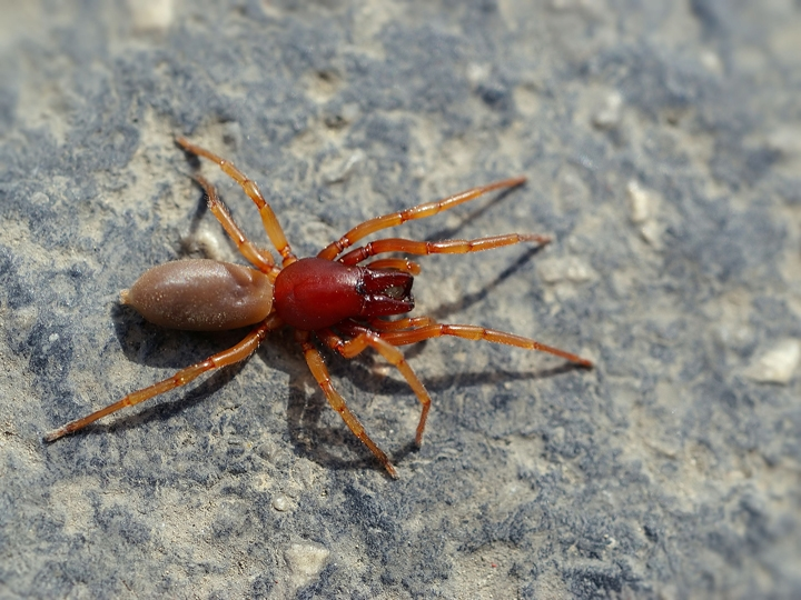 Don't Believe Everything You Read About Spiders--Or Anything Else for that Matter! - Bug Squad - ANR Blogs