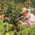 Photographer Allan Jones of Davis focuses his camera on insects in the Häagen-Dazs Honey Bee Haven. (Photo by Kathy Keatley Garvey)