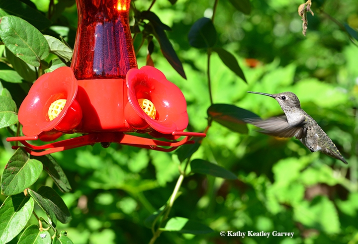 What You May Not Know About Hummingbirds Bug Squad Anr Blogs