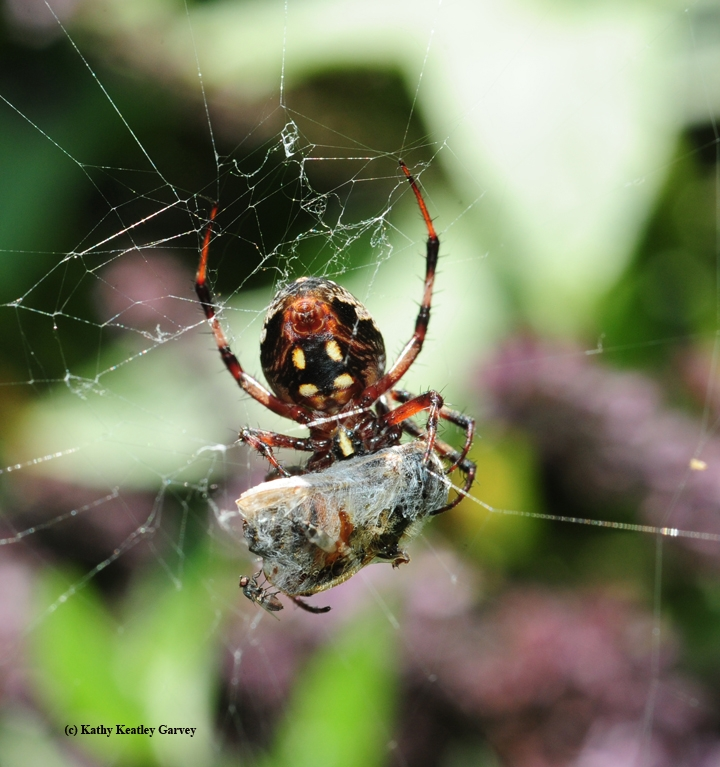 Why You Should Love Spiders--Or at Least Like Them! - Bug