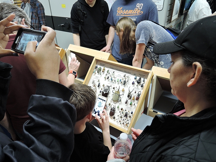 Will Travel for Bugs! Bohart Museum Featuring Global