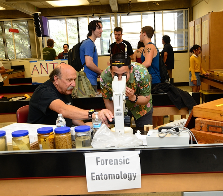 Dr Bob Forensic Entomology And Uc Davis Picnic Day Bug Squad Anr Blogs