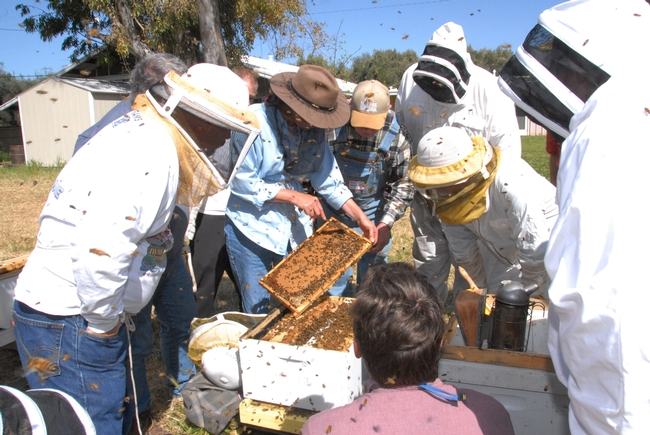 Susan Cobey teaching a queen bee rearing class at the Harry H. Laidlaw Jr. Honey Bee Research Facility, UC Davis. (Photo by Kathy Keatley Garvey)