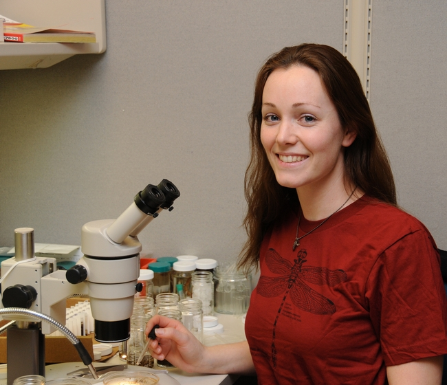 Danielle Wishon, an undergraduate student in entomology at UC Davis, works at the Bohart Museum of Entomology. (Photo by Kathy Keatley Garvey)