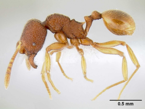Profile of an Ant
