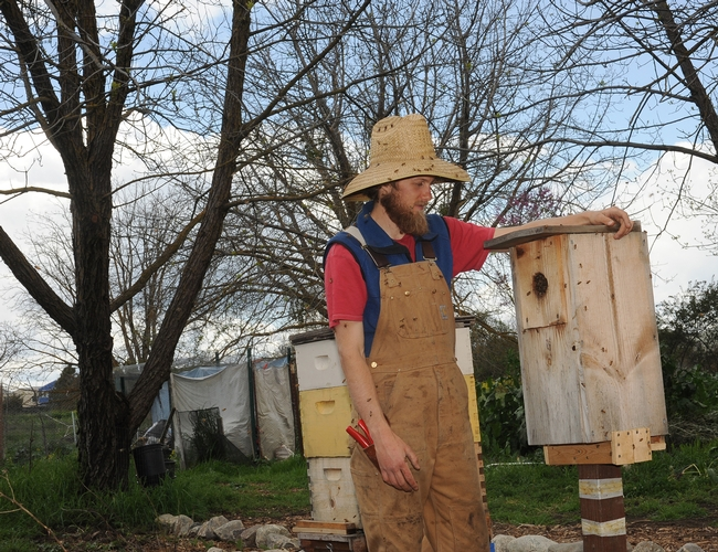 Derek Downey checks out a birdhouse filled with bees. The bees swarmed March 30 and are now established in a once-vacant bee box in the sanctuary. (Photo by Kathy Keatley Garvey)