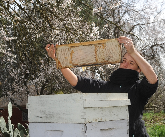 Melanie Lataste examines a frame of honey. She  and her husband, Pierre Arrial, are new members of the Bee Collective.