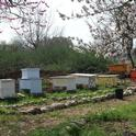 View of the Davis Bee Sanctuary. (Photo by Kathy Keatley Garvey)
