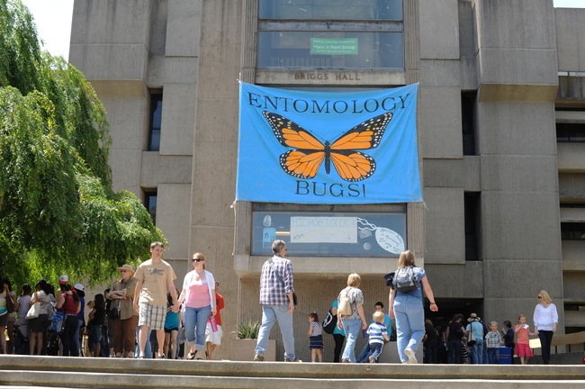 Bug banner at Briggs beckons. (Photo by Kathy Keatley Garvey)