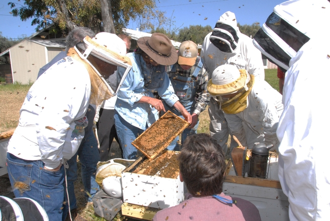Bee breeder-geneticist Susan Cobey (center with frame) teaches a queen-bee rearing class. (Photo by Kathy Keatley Garvey)
