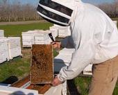 Beekeeper Gear