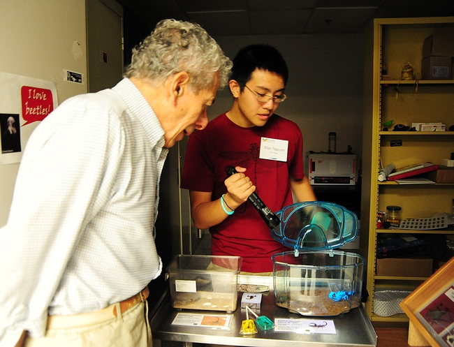 UC Davis entomology undergraduate student Alexander Nguyen flashes a UV light on a scorpion, as Professor Demosthenes Pappagianis, M.D., Ph.D., of Medical Microbiology and Immunology, watches.  (Photo by Kathy Keatley Garvey)
