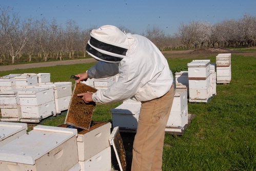 TENDING BEES--Michael
