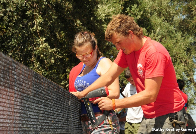 Derek Tully of Boy Scout Troop 111 and his girlfriend, Emily Talbot, staple wire to the fence. This was his Eagle Scout project. He competes on the Davis High School water polo and swim teams and she's a talented violinist. (Photo by Kathy Keatley Garvey)