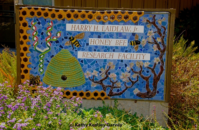 This sign, the work of noted artist Donna Billick of Davis, greets visitors to the Harry H. Laidlaw Jr. Honey Bee Research Facility on Bee Biology Road, UC Davis. (Photo by Kathy Keatley Garvey)