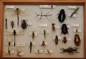 Diversity of Insects