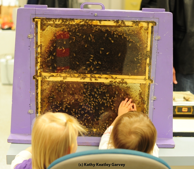 Two 18-month-old girls checking out the bees: Tilly Matern (left) and Vivienne Statham (right). (Photo by Kathy Keatley Garvey)