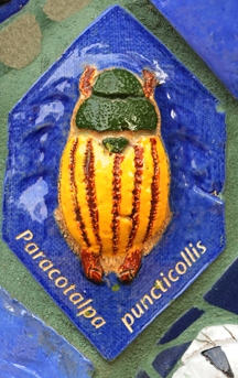 Shining chafer beetle is an adoptee. (Photo by Kathy  Keatley Garvey)