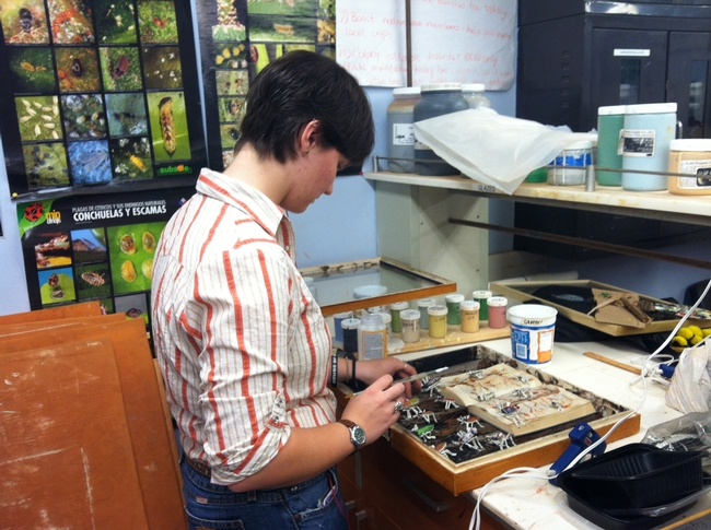 Entomology student Whitney Krupp at work on her display for the show,