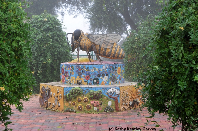 Fog shrouds the bee sculpture in the Haagen-Dazs Honey Bee Haven. It is the work of Donna Billick of Davis. (Photo by Kathy Keatley Garvey)