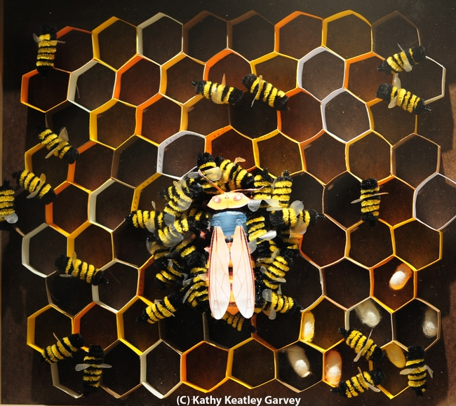 This art work by Nhu Mai shows a doomed hornet in a honey bee hive. (Photo by Kathy Keatley Garvey)