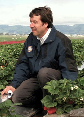Frank Zalom in strawberry field in Watsonville.