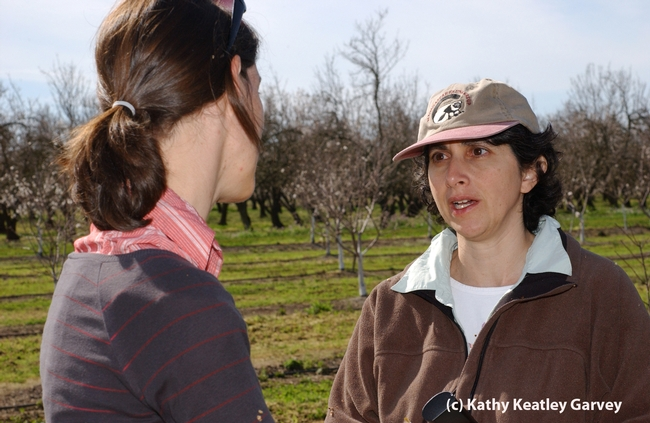 UC Berkeley conservation biologist Claire Kremen (right) confers with colleague Alexandria-Marie Klein, then a postdoctoral fellow in her lab. (Photo by Kathy Keatley Garvey).