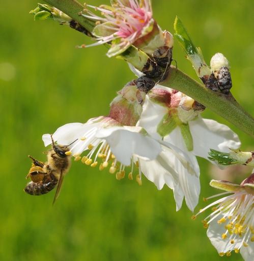 Pollen load