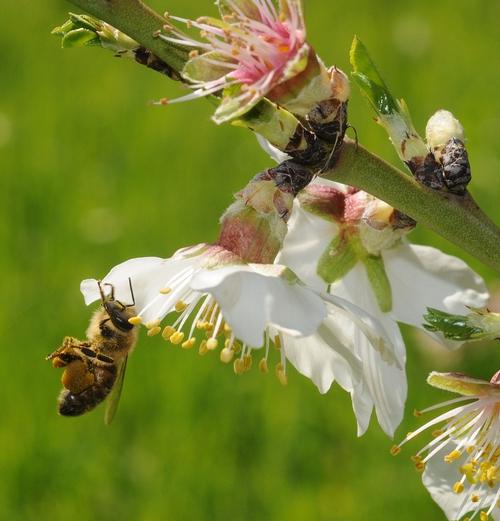 Packing pollen