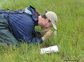 Jay Rosenheim, professor of entomology at UC Davis, doing research in a meadow. (Photo by Kathy Keatley Garvey)