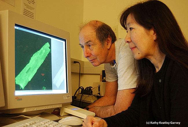 Heart researchers Bruce Hammock and Nipavan Chiamvimonvat. (Photo by Kathy Keatley Garvey)