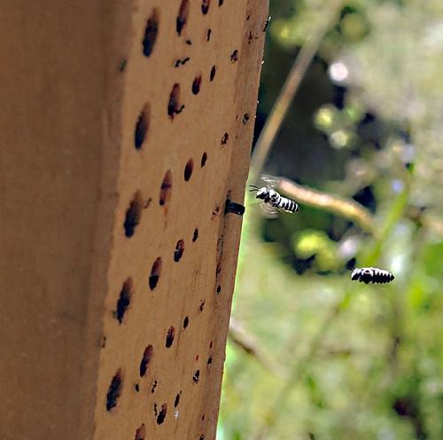 Bee condo
