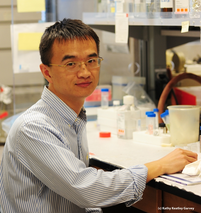 UC Davis postdoctoral researcher Zuodong Zhang. (Photo by Kathy Keatley Garvey)