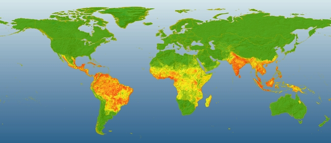 Global dengue risk. Areas in red indicate high risk for dengue occurrence while green areas indicate low risk. (Map courtesy of Jane Messina)