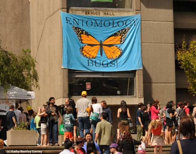 Briggs Hall is a popular place to be on UC Davis Picnic Day. (Photo by Kathy Keatley Garvey)