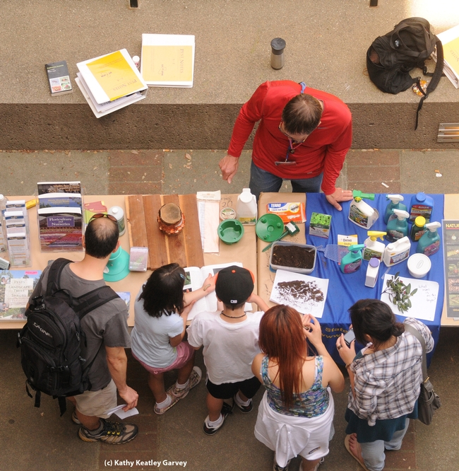 Principal editor/entomologist Steve Dreistadt of UC IPM explains insects to visitors. (Photo by Kathy Keatley Garvey)