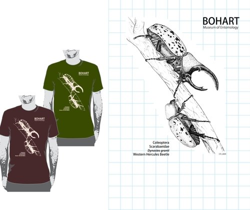 WESTERN HERCULES BEETLES--This is the original drawing by UC Davis undergraduate student Courtney Lambert that graces a Bohart Museum of Entomology T-shirt. The T-shirt is part of the Bohart Museum's educational and outreach program. Proceeds are used to provide continuing undergraduate support and training at the Bohart.
