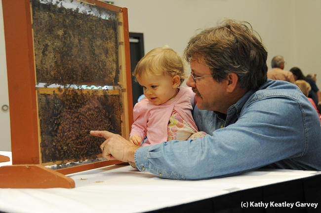 Beekeeper Brian Fishback of Wilton shows his daughter, Emily, a bee observation hive. (Photo by Kathy Keatley Garvey)
