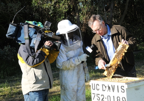 THE BEE MAN, aka Eric Mussen, Cooperative Extension apiculturist and faculty member at UC Davis, talks to Fox 40 reporter Darsha Philips (center) and cameraman Andrew Faulk. (Photo by Kathy Keatley Garvey)
