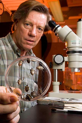 Jeffrey Aldrich and brown marmorated stink bugs.