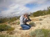 Fran Keller photographing insects in the Mojave Desert. (Photo by Mark deVries)