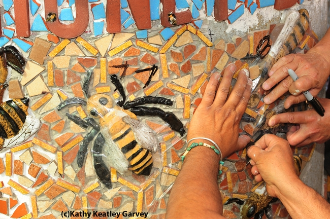 Multiple hands at work on the mosaic ceramic panels. (Photo by Kathy Keatley Garvey)